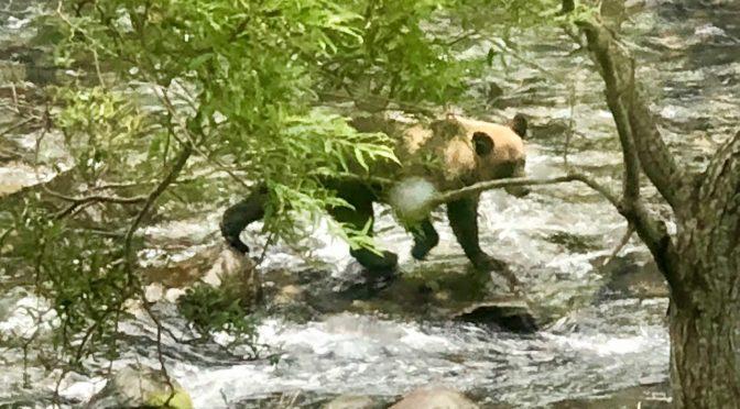 【北海道】知床の旅とヒグマさん目撃ビデオ