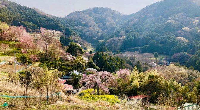 【丹沢】鍋割山のてっぺんで鍋焼きうどんとお昼寝