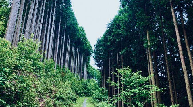 【奥多摩】川苔山へリハビリ登山